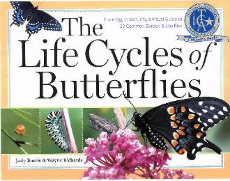 The Life Cycles of Butterflies front cover